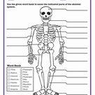 Skeletal System Quiz | Worksheet | Education.com