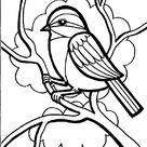 Kuş Boyama Sayfası   OkulöncesiTR Preschool Kindergarten