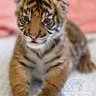 Baby Zoo Animals