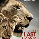 Excellent cinematography, but typically difficult to watch if you have any empathy at all toward animals   some very difficult scenes of nature at its harshest, but worthwhile film   lions are disappearing in the wild at an alarming rate