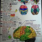 15 cool facts about Brain