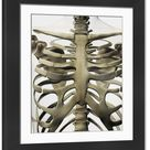 Large Framed Photo. Three dimensional view of female sternum and