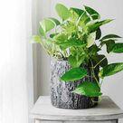 Best Indoor Bathroom Plants to Reduce Humidity   Urban Gardening