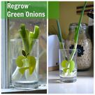 Regrow Green Onions