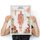Wall decor The Female Anatomy  Feminist  Anatomy Chart    Etsy