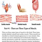 7 Facts About the Muscular System Every Nursing Student Should Know.