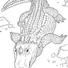 American Alligator or Common Alligator coloring page | Free Printable Coloring Pages