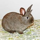 Rabbits- Rabbit Care- How to treat ear mites in rabbits, naturally! Home remedy for treating ear mites in rabbits. Pin for later!