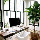 Pflanzentipps für große Räume