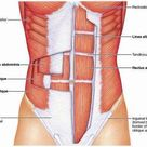 How to Activate Transverse Abdominal