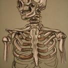 skeleton study sketch by AdamHallart on DeviantArt