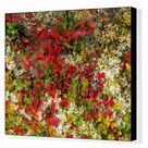 Box Canvas Print. Lingonberries, Cowberries & Lichen, Lofoten
