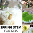 Spring STEM Activities For Kids   Stem activities, Plant science, Science activities for kids