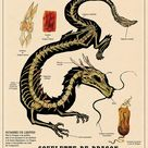Weird Anatomies, Fantastic Creatures And Fancies Chart By French Illustrator