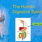 Human Digestive System   Google Slides and PowerPoint Lesson