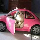 Pink Cat