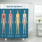 Human Body Internal Organs Circulatory Nervous and Skeletal Systems Shower Curtain 66x72 inch