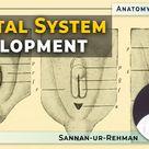 Genital System Development   Genital Ducts