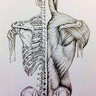 Skull to Pelvis Back Bones/Muscles by 3SticksIllustration on DeviantArt