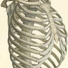 Atlas of Human Anatomy: Plate 3: Figure 1
