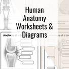 Human Anatomy Worksheets & Diagrams
