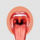 Taste Bud Tongue Map Sense PNG - Free Download