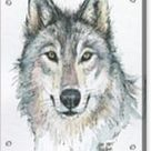 Wolf Acrylic Print by Olga Shvartsur