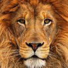 Lion King 3
