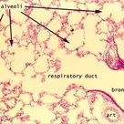 SIU SOM Histology INTRO