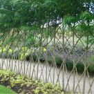 Living Willow Fence