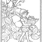 FLOWER FAIRY  COLORING SHEETS STRAWBERRY & QUEENS OF THE MEADOW