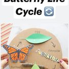 Butterfly Life Cycle 🔄