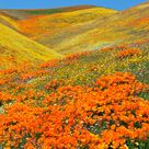 14 Destinations to Visit and See Gorgeous Spring Flowers