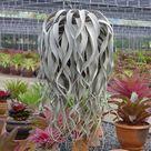 Cool Plants