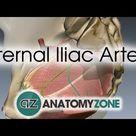 Internal Iliac Artery
