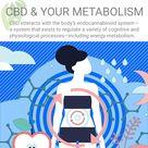 CBD, Your Endocannabinoid System, and Your Metabolism