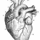 1000 Piece Puzzle. Human Heart Anatomy 1888