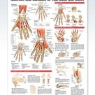 Anatomy and Injuries of the Hand and Wrist Chart 20x26