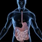 Heal the Gastrointestinal Tract with Licorice Root