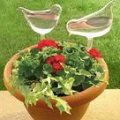 Self Watering Bird Globes