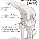 Proko - How to Draw Legs – Bone Anatomy for Artists