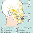 Kopf  und Gesichtsnerven