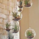 Tillandsien 101 Ideen, Ihre Luftpflanzen zu inszenieren