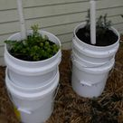 5 Gallon Buckets