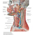 Lymph Vessels and Nodes of Head and Neck Anatomy