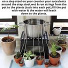 Watering your plants while on vacation. - Funny
