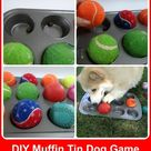 Dog Items