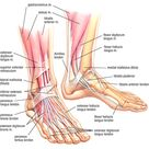 Developing Strength & Stability in the Foot, Ankle, and Lower Leg — Mountain Peak Fitness
