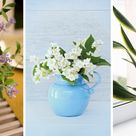 How to Grow and Care for Peace Lilies Indoors