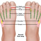 Foot Reflexology Chart: Planter, Dorsal, Medial & Lateral Map